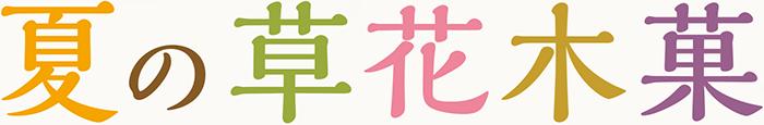 夏の草花木菓